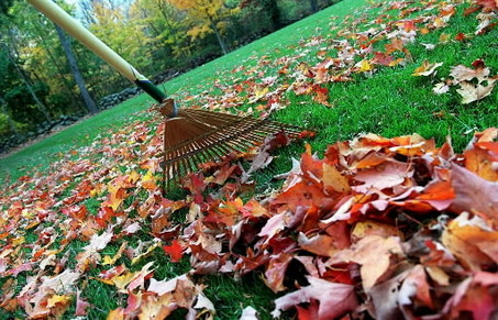 Raking Leaves - Fall Cleanup