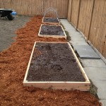 Triple beds with cedar mulch placed all around